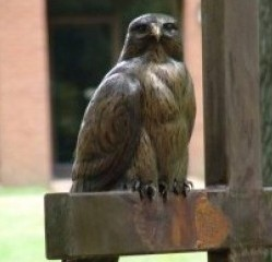 Redtail Hawk on a Cross