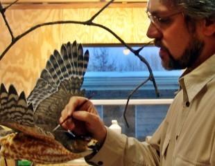 Cooper's Hawk Production