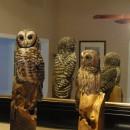 Miniature Owls