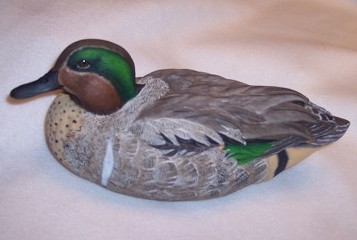 Greenwing Teal Drake