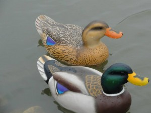 Working Mallard decoys
